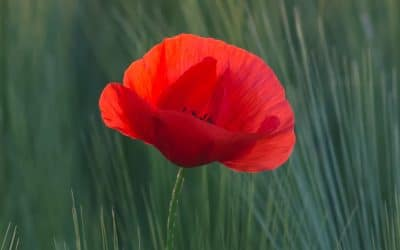 Commemoration of the End of the First World War