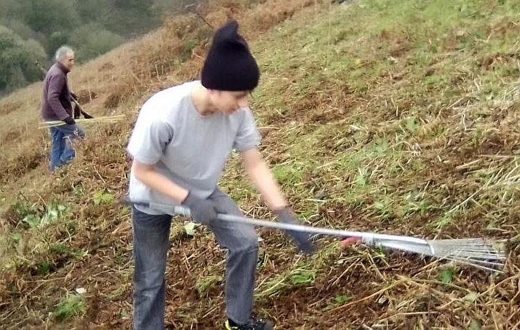Tree Planting Updates