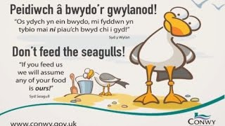 Problem Seagulls – DO NOT FEED THEM!